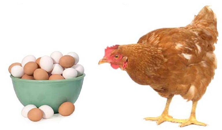 مرغ، تخم، مرده