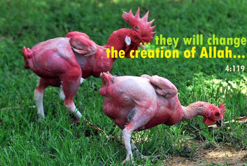 FACT CHECK Does KFC Use Mutant Chickens