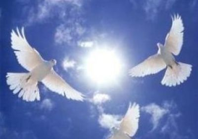 کبوتر و آسمان