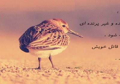 تکلیف در حیوانات و پرندگان