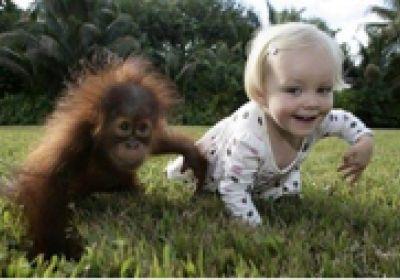 بچه انسان و میمون