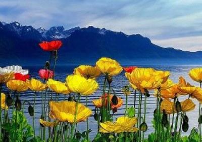 گل و طبیعت