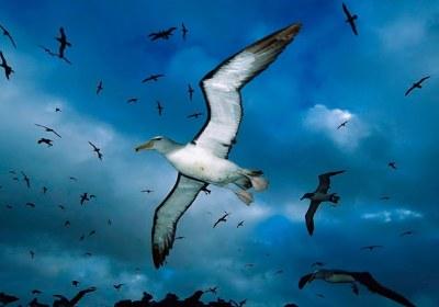 پرندگان در حال پرواز