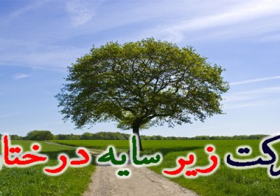 برکت زیر سایه درختان