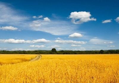 دنیا مزرعه آخرت است