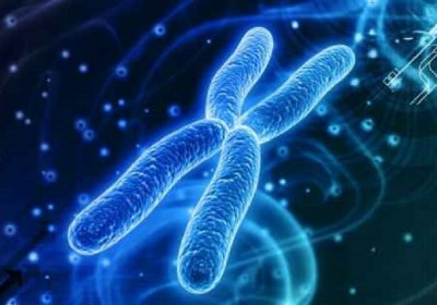 کروموزوم ها