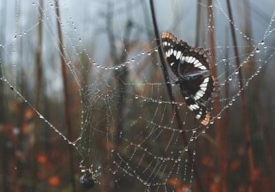 تار عنکبوت