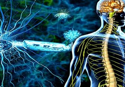 بدن انسان و قوای عصبی