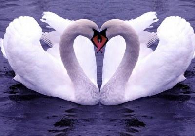عشق ورزی و بی توجهی همسر