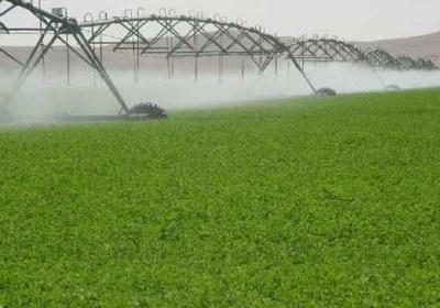 اهمیت بخش کشاورزی