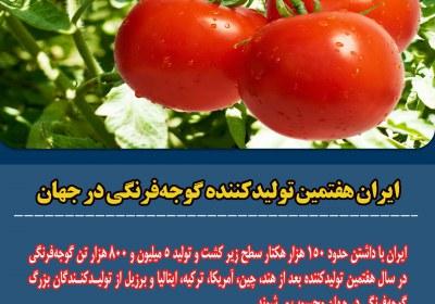 تولید گوجه فرنگی در ایران
