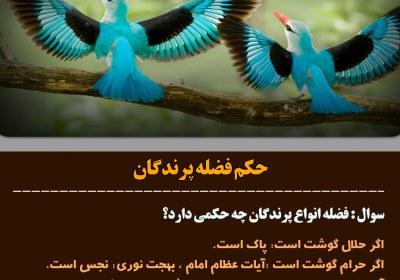 فضله پرندگان