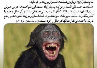 انسان و میمون بسیار به هم شبیه اند