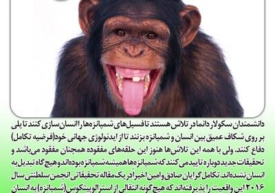 انسان از نسل شامپانزه نیست