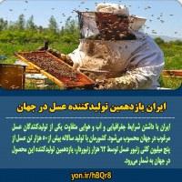 تولید عسل در ایران