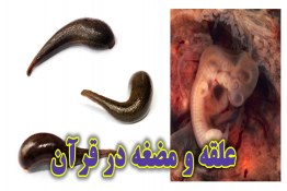 شگفتی های علمی قرآن