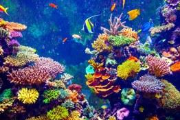 قلب انسان و راز مرجانهای دریایی