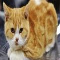 گربه، خرید، فروش