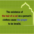 The hair of a cat on a person's clothes