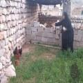 گنج روستا
